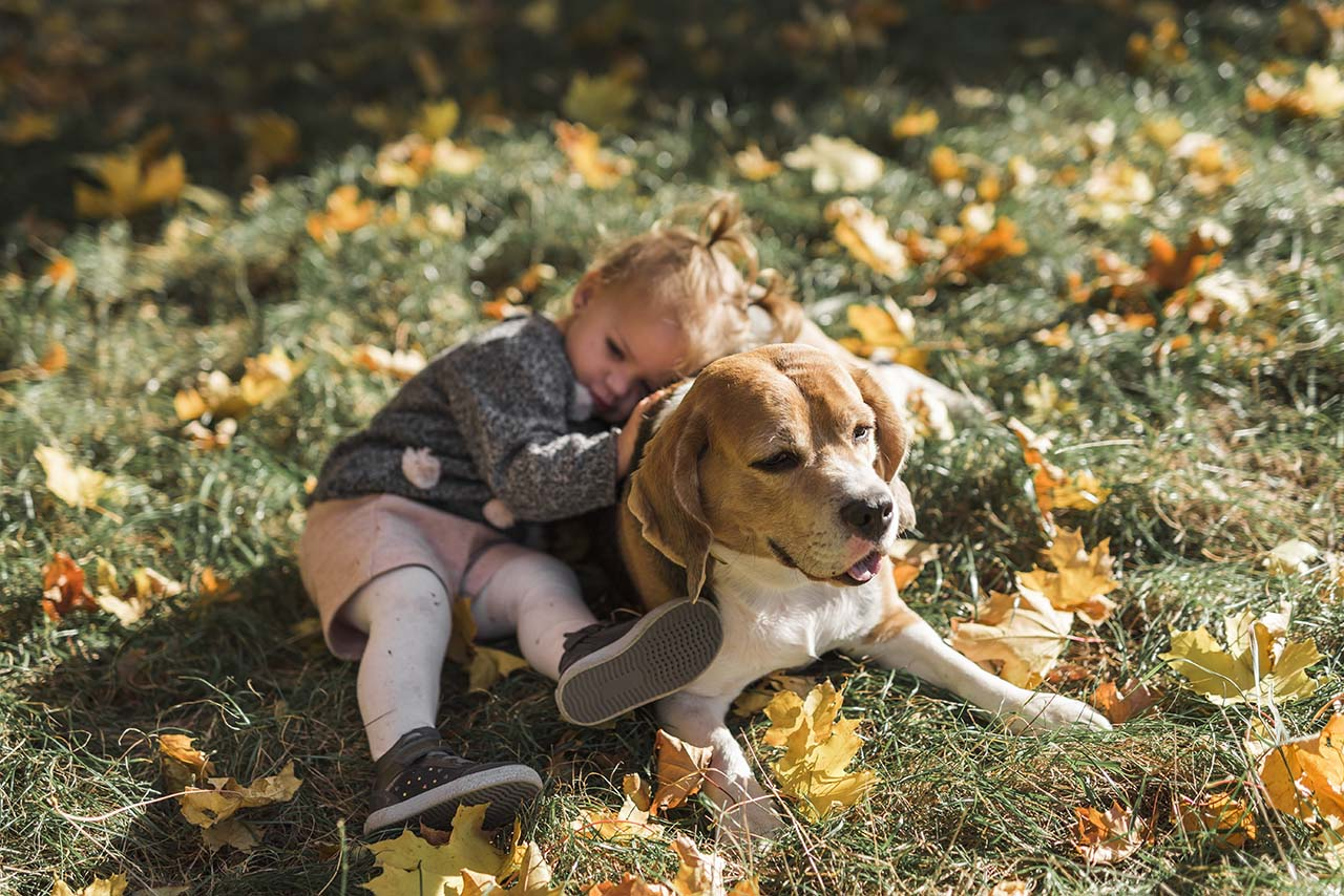 How Do Dogs Communicate with Each Other?