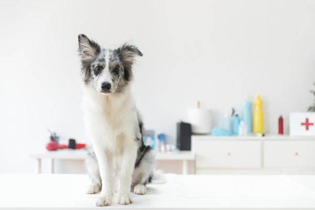 portrait-dog-white-table-vet-clinic
