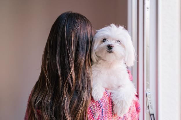 woman-holding-her-maltese-dog-shoulder-home